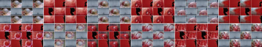 Schlachtfelder, 2010. 12 fotografías. 294 x 1632 cm